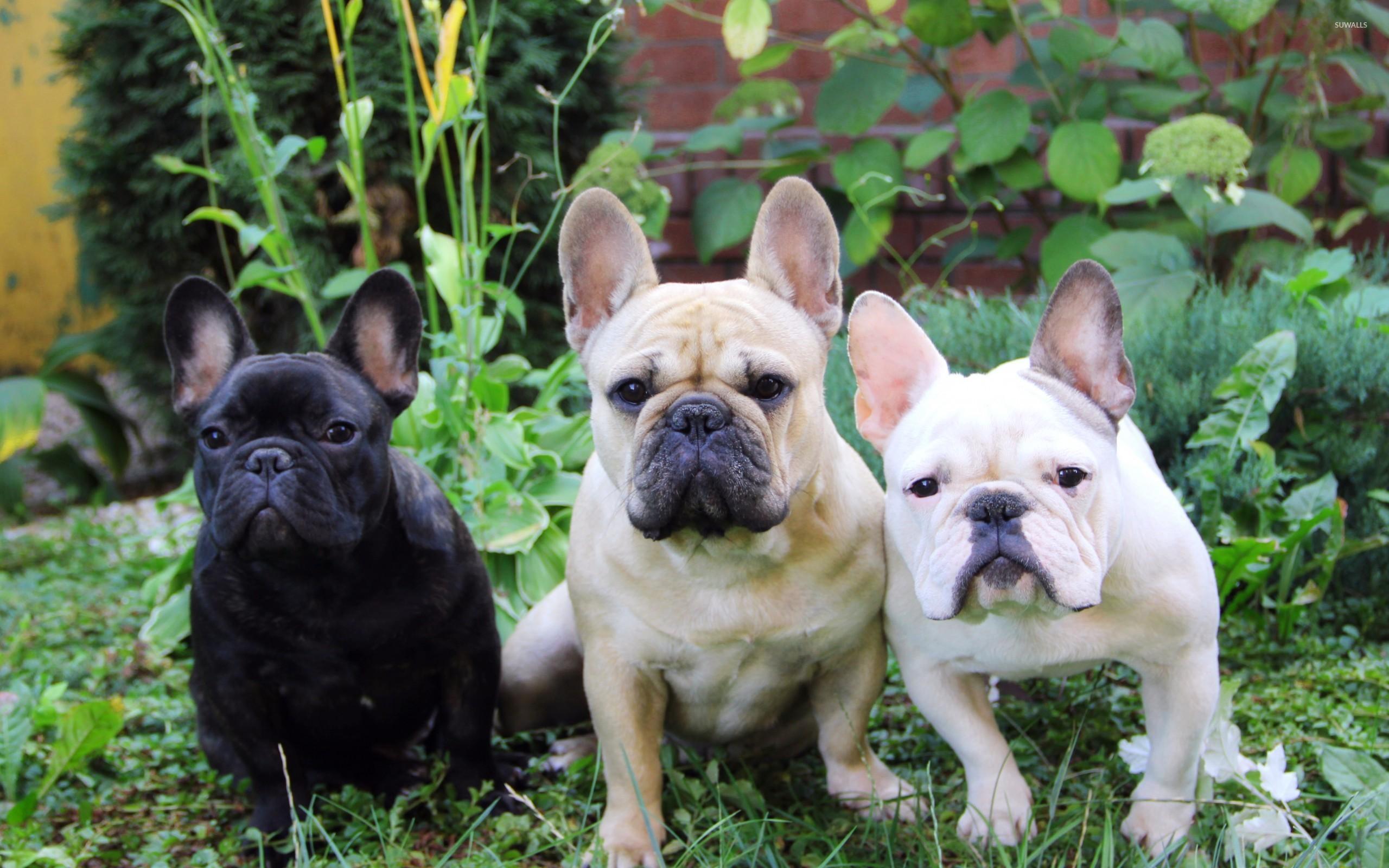 S příběhy psů, kteří pocházeli zmnožíren a potřebovali nového pána a trpělivou péči, jsme se setkávali čím dál častěji