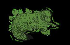 Sedmiletá fenka zlatého retrievera Majla. Ilustrace: Lucie Muchovičová