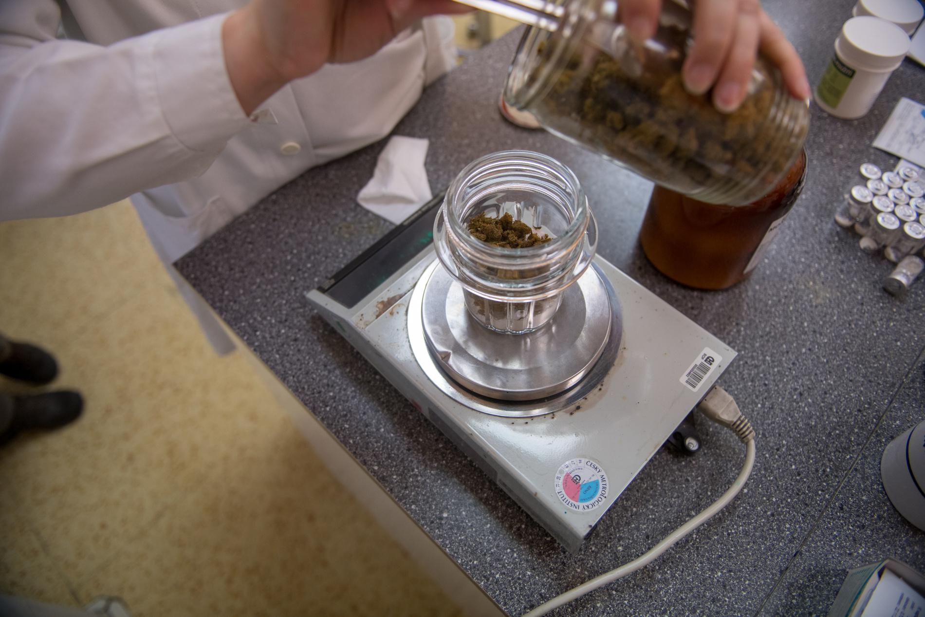 Léčebné konopí připravované v nemocniční lékárně u sv. Anny.