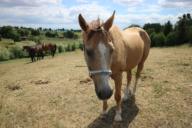 Kůň, kterému konopí zachránilo život.