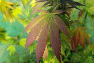 Rostlina, která může zachránit lidský život. Foto: Kosh