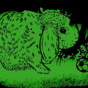 Spokojený králíček.