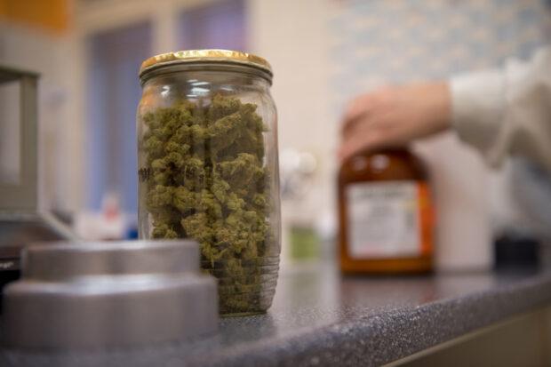 Konopí v lékárně čeká na vydání pacientům.