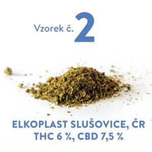 České konopí s vyrovnaným poměrem CBD a THC.