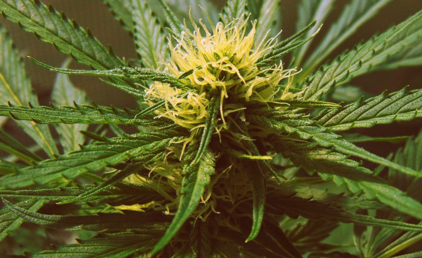 """Velká část vědců se dlouho mylně domnívala, že THC a kanabinoidy obecně jsou schopné """"nasáknout"""" do neurálních membrán."""