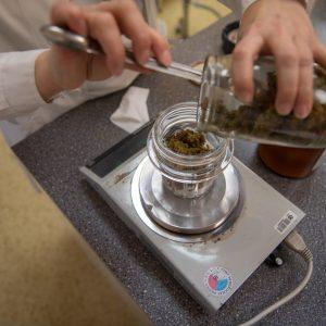 Příprava léčebné konopí v brněnské lékárně.